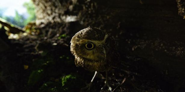 小動物たちの驚くべき生態を知ることができる「知られざる小動物の世界」