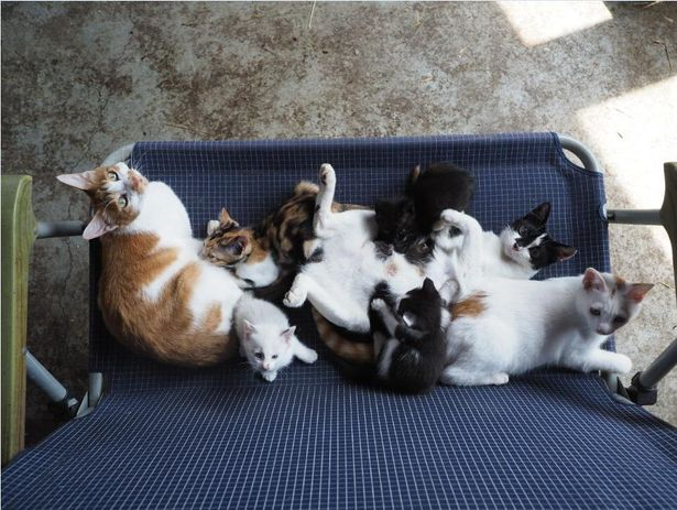 冬の寒さをしのぐため家族で固まって暖を取る