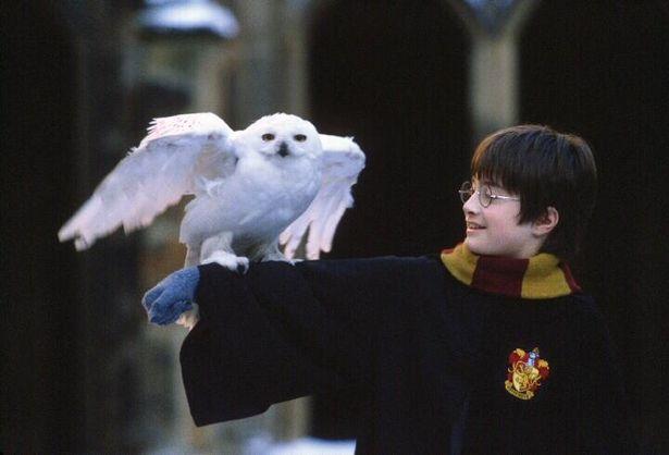【写真を見る】幼き日のハリー。演じたラドクリフもいまや立派な大人に(『ハリー・ポッターと賢者の石』より)