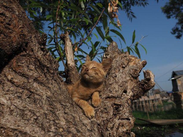 子ネコは木に登り、まったりムード