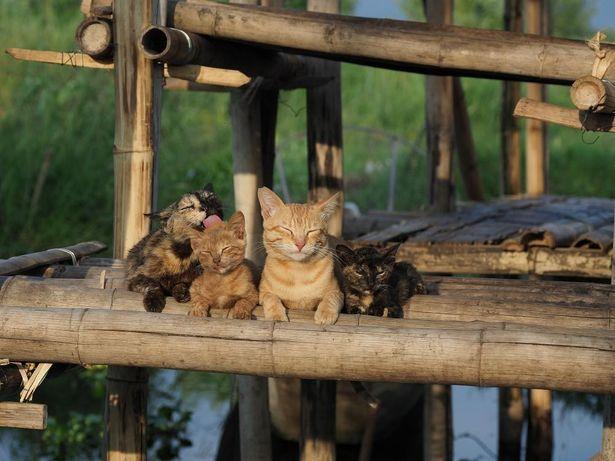 『劇場版 岩合光昭の世界ネコ歩き あるがままに、水と大地のネコ家族』は、2021年1月8日(金)より公開