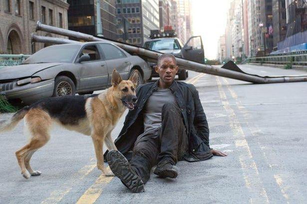 愛犬と共に孤独な生活を送る男の戦いが映し出される『アイ・アム・レジェンド』