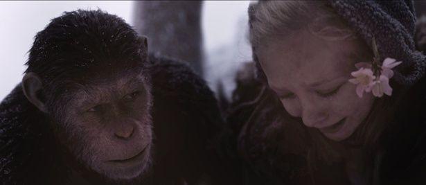 【写真を見る】68年から公開された旧『猿の惑星』シリーズの前日譚。『猿の惑星:聖戦記』は3部作の完結編にあたる