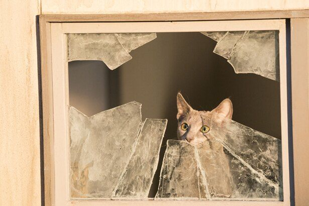 吉沢亮が演じた猫の良男。窓の外を見て黄昏れている様子