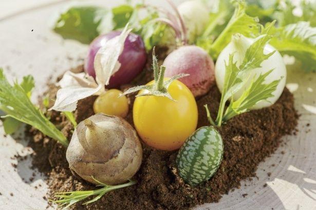 富永農園のほったらかし畑のサラダ