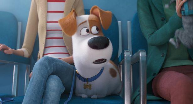 主人公のマックスは臆病者のテリア犬