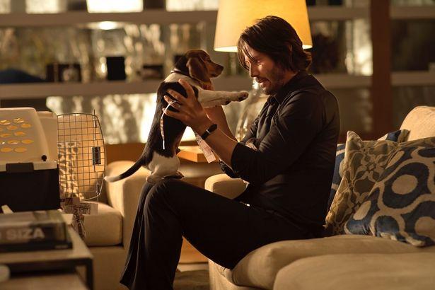 亡き妻が遺した愛犬と平穏な日々を送っていたのだが…(『ジョン・ウィック』)