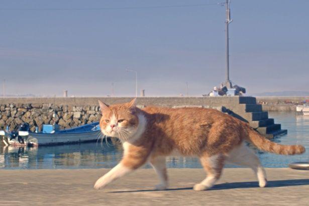 岩合光昭が捉える猫の姿に癒される(『ねことじいちゃん』)