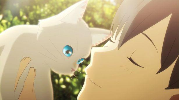 スタジオコロリド制作の最新作アニメ『泣きたい私は猫をかぶる』