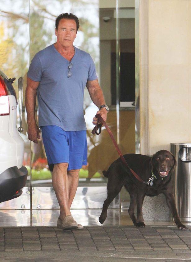 愛犬と散歩するシュワちゃん