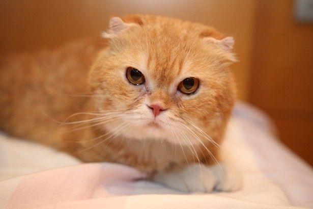 『高台家の人々』のヨシマサ役のオス猫・ティティ