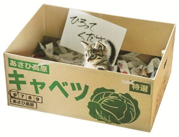 『世界から猫が消えたなら』の猫キャベツ。潤んだ瞳が愛くるしい