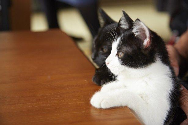 """猫を飼っている人ならわかる""""あるある""""も満載な『猫なんかよんでもこない。』"""